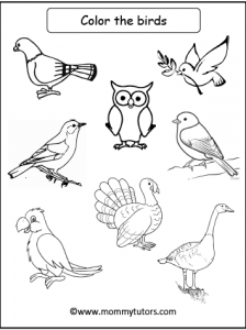 Color the birds